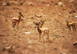 Golestan National Park